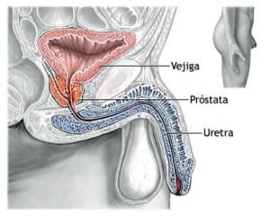 ¿Qué es la próstata?